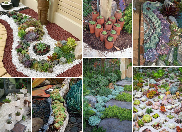 ... Having A Beautiful And Easy To Maintain Garden Is Not An Easy Task.  Fortunately, You Can Create Succulent Landscapes For Your Garden.